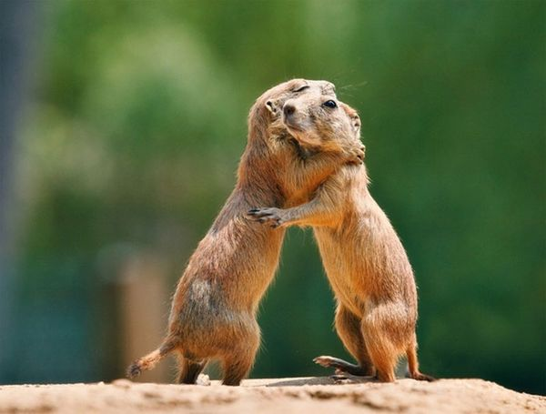 Wonderful funny pictures of hugs
