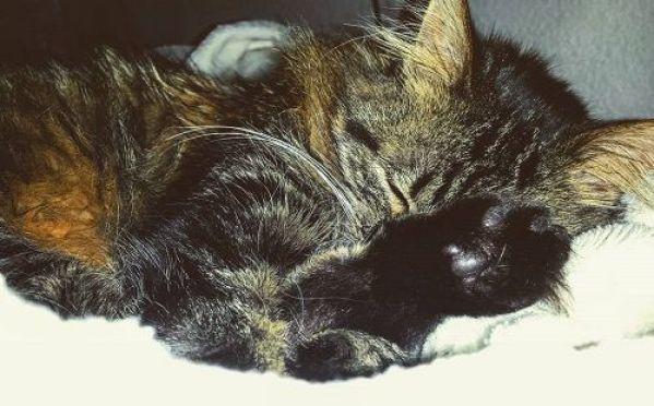 good night my sweet girl