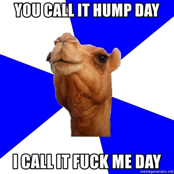 Fuck Hump Day Meme 6