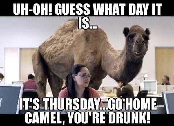 Funny Hump Day Pics with Camel 2
