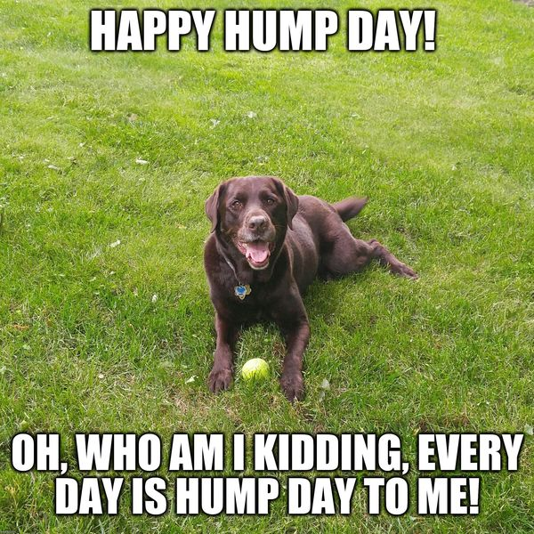Hilarious Images with Hump Day Humor 4