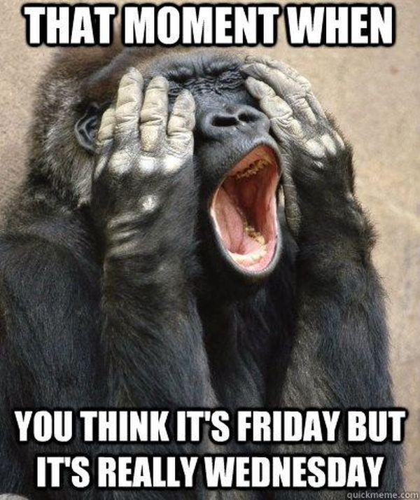 Cute funny memes humpback day 3