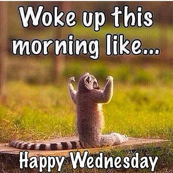 The Best Good Morning Hump Day Memes 2