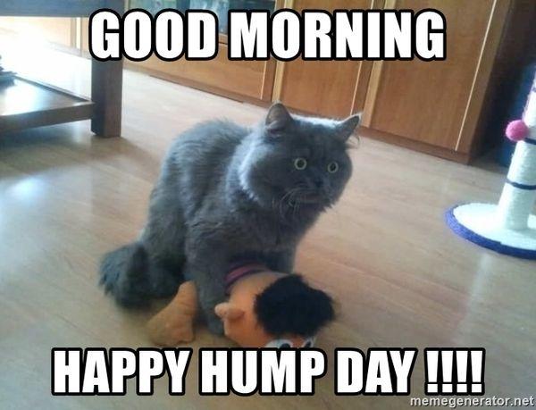 Good morning hump day memes 5