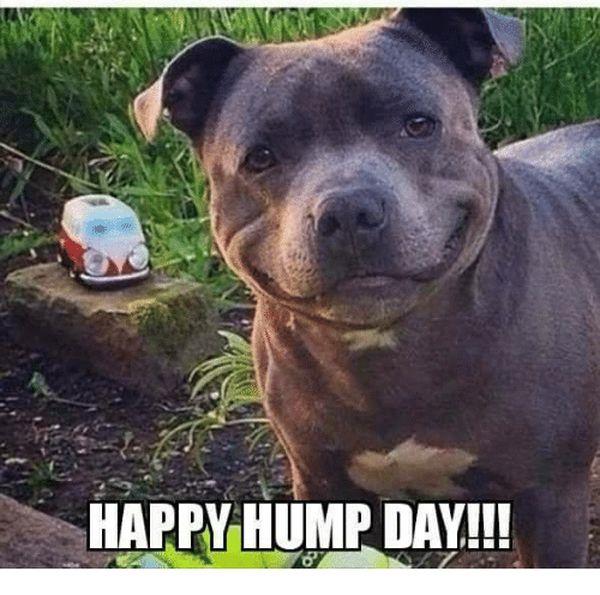 Good morning hump day memes 6