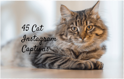 100 Cat Captions for Instagram – Meow
