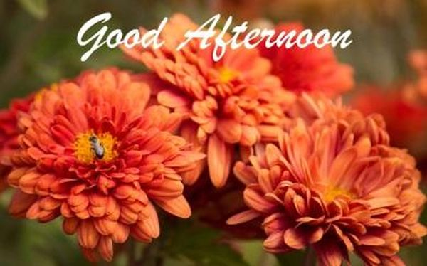 Beautiful good afternoon images to use as free wallpapers 1