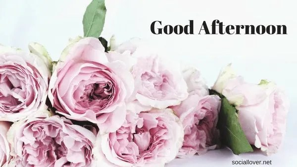Beautiful Good Afternoon Images to Use as Free Wallpaper 6