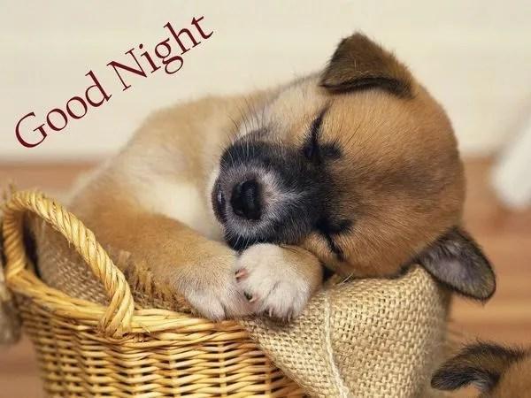 Cute Photos for a Good Night 1