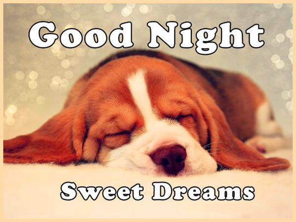 Cute Photos for a Good Night 4