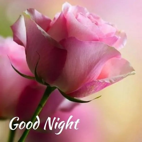 Useful Good Night Images with Nice Flowers 2