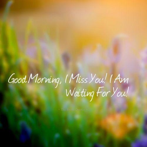 Доброе утро фото в траве
