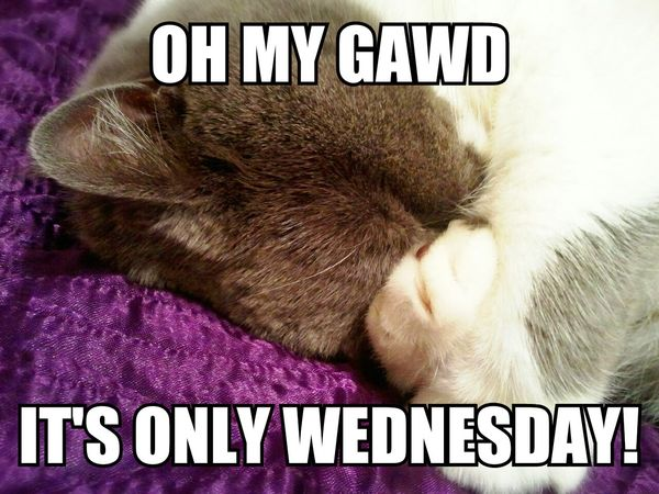 Funny Memes about Wednesday 4