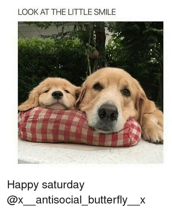 Happy Saturday Meme 4