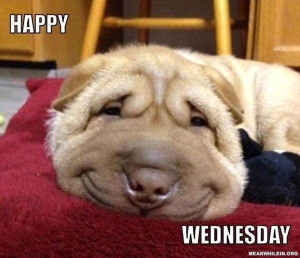 Happy Wednesday Meme 2