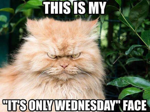 Happy Wednesday Job Meme 4