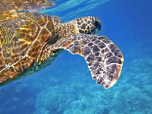 snorkeling captions