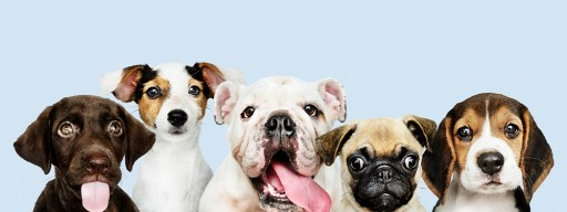 best sites to adopt a dog online