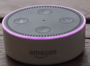 echo dot purple