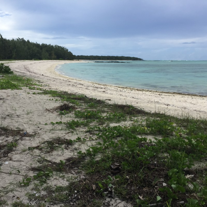 Beach in Mauritius. It was easy to imagine dodos wandering here. Story behind Dodo Adventures.