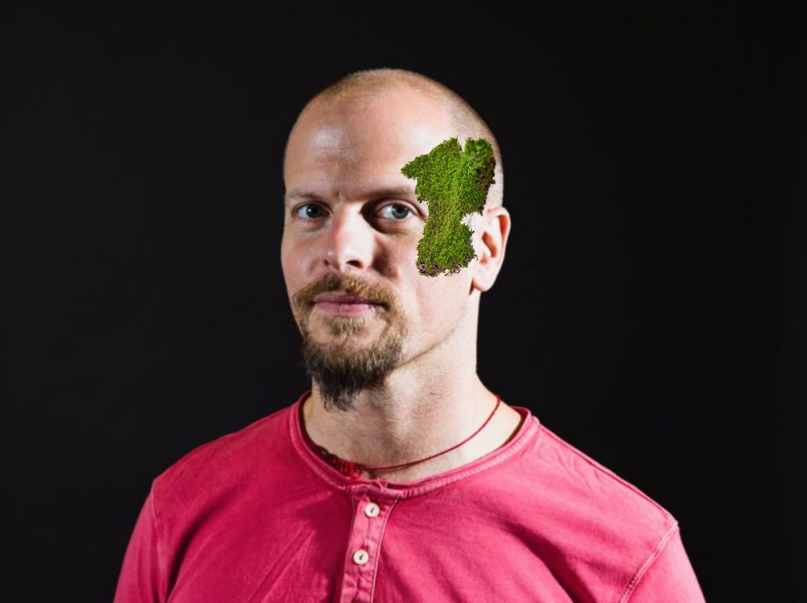 Moss growing on north side of Tim Ferriss