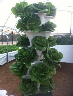 A Vertical Hydroponics System from EzGro Garden