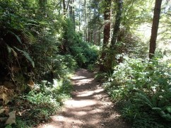 Forrest Trail