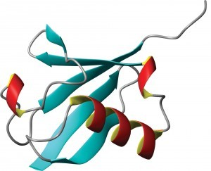 The ubiquitin molecule within all living cells