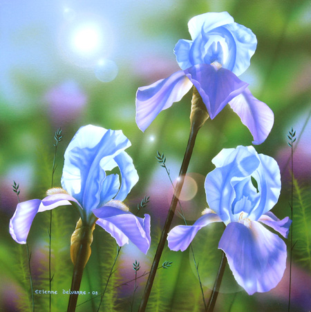 Iris – acrylique sur toile – 50 x 50 cm