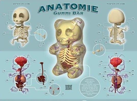 anatomy gummi