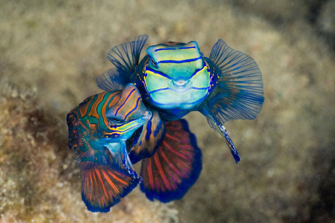 A Gigantic Marine Sanctuary Where Wildlife Is Flourishing