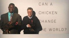 Bill Gates Afrika'ya 100 bin tavuk bağışlayacak