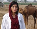 Common Ectoparasites of the Camels in Pakistan and their Control