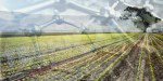 Nanotechnology and sustainable agriculture