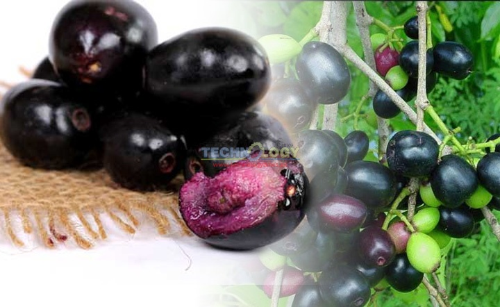 Black plum has sweet and sour taste and acidic and astringent in nature