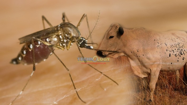 Ectoparasites infections cause serious threat to animals health and economy every year
