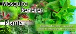 Insect Repellent plants; a potential source to mitigate insect borne diseases
