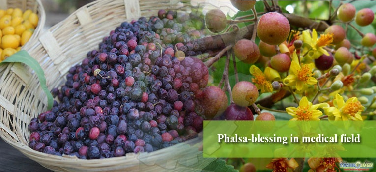 Phalsa-blessing in medical field