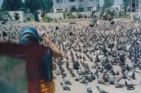 Hazratbal pigeons