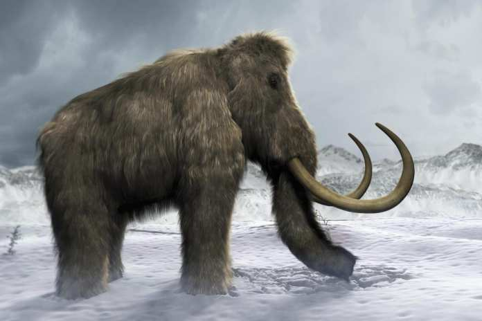 Woolly mammoths coming back?