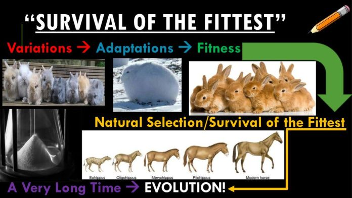 evolution and Survival of the fittest