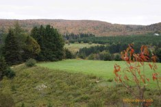 Field in North Cape Breton