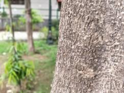 Tree Trunk (Bokeh)