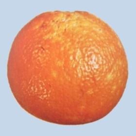 Serpeta en naranja navel - Limite segunda