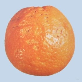 Serpeta en naranja navel - Destrio