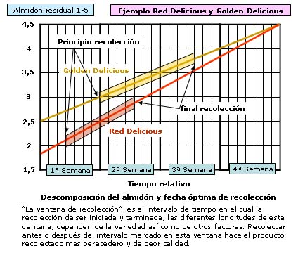 Descomposición del almidon y fecha optima de recoleccion en golden delicious