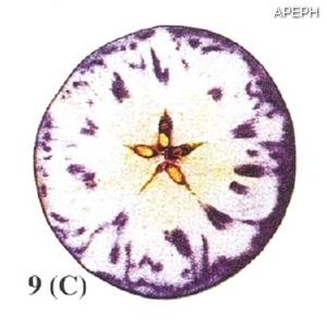 Test almidon fruta pepita tipo circular estado 09