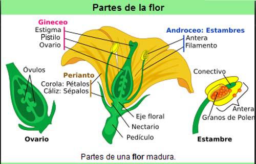 Las partes de la planta El fruto y su clasificacin