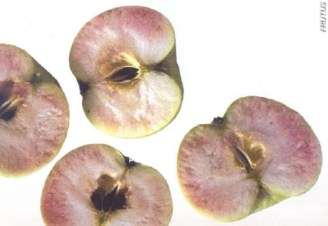 CORAZÓN ROSÁCEO (CORE FLUSH) corazon rosa