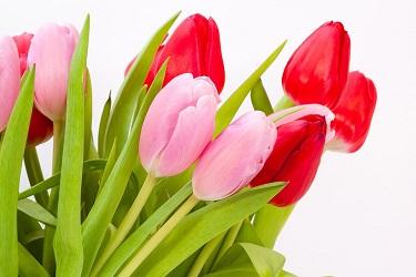 Bonitas flores disponibles para regalar en Debenhams Flowers